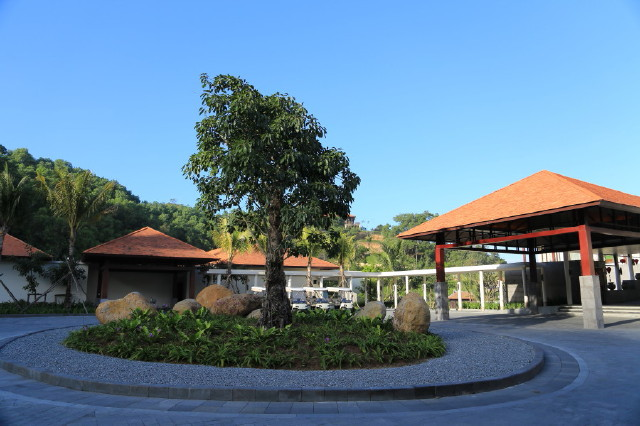 with a smaller banyan tree